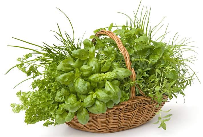 5 erbe selvatiche commestibili del mese di giugno