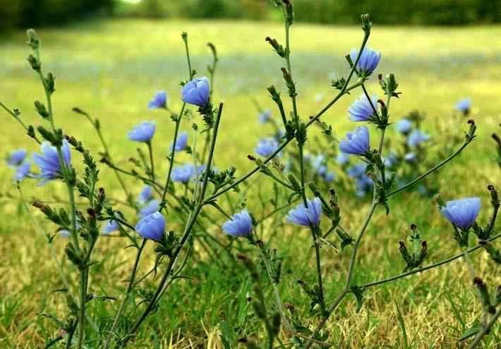 Erbe spontanee commestibili in primavera-estate