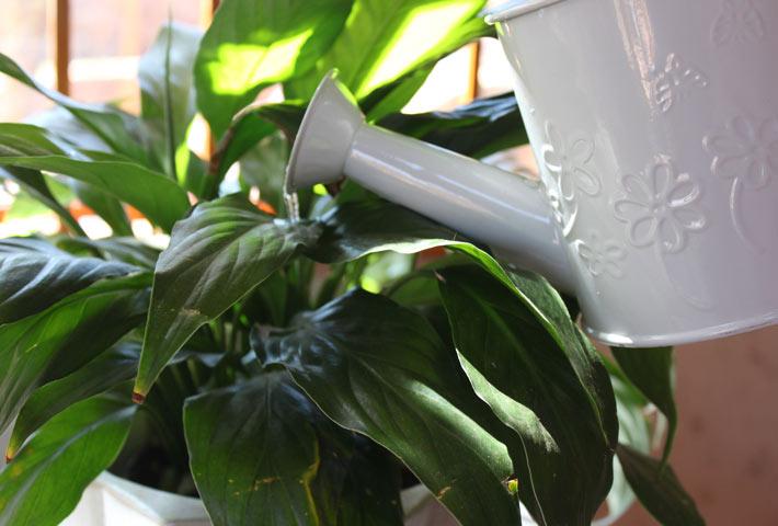 Le migliori piante ornamentali per purificare l 39 aria for Piante secche ornamentali