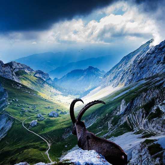Viaggi e vacanze - Dogana svizzera cosa si puo portare ...