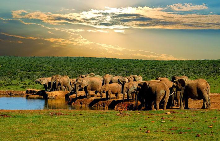 Addo Elephant National Park - SudAfrica - Safari In Africa Big Seven