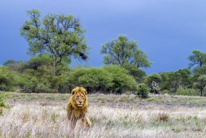 Kruger National Park - Safari In SudAfrica Big Five