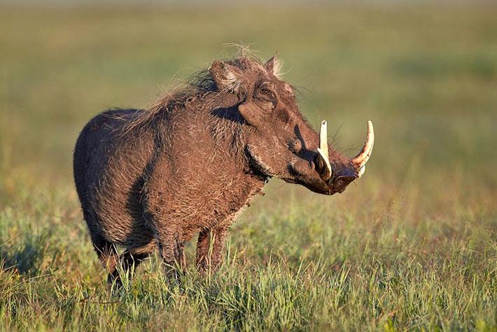Parco Nazionale Del Serengeti - Safari In Africa