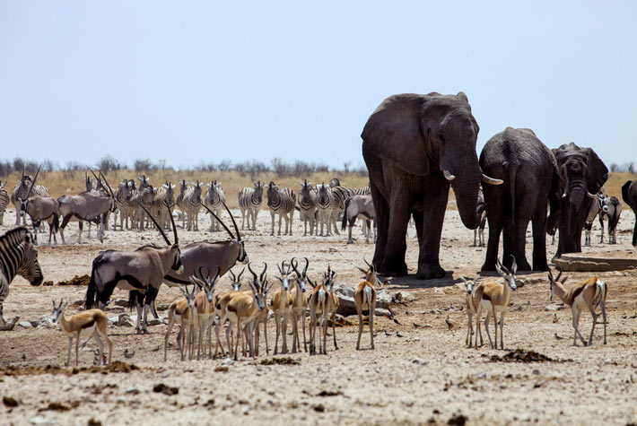 Parzo Nazionale del Chobe - Botswana - Safari in Africa