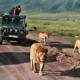 Safari In Africa: Consigli, Dove Andare, Quando Partire, Costi