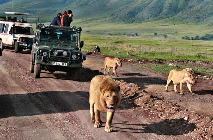 Safari In Africa: Dove E Quando Andare, Costi, Cosa Vedere, Big Five, Big Seven